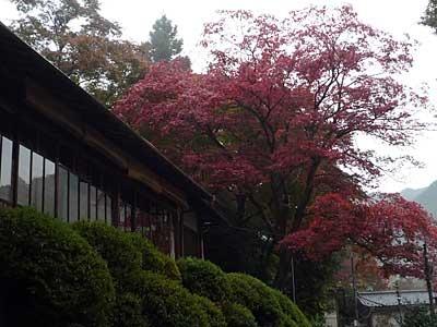 2016-11okutama19.jpg