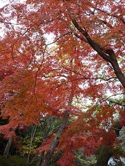 inokashira2012-2.jpg
