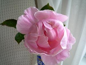 rose09-10.jpg