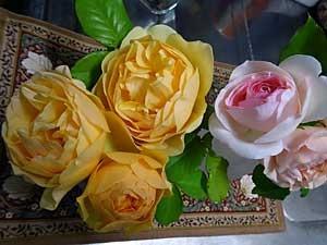 rose2018.jpg