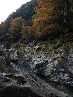 tamagawa2013-11.jpg