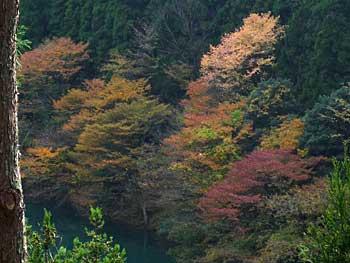 tamagawa2013-3.jpg